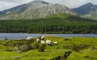 Condado de Galway. Conociendo la naturaleza irlandesa - Irlanda Circuito Irlanda fantástica