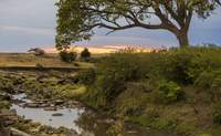 Nairobi - Masai Mara. Adéntrate en la sabana - Kenia Safari Safari en Kenia: Parque Nacional de Tsavo