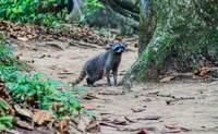 Caribe Sur. Disfrutando de la brisa del caribe - Costa Rica Gran Viaje Costa Rica activa