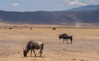 Amboseli – Arusha - Crater del Ngorongoro. ¡Bienvenido a Tanzania! - Kenia Safari Kenia y Tanzania al completo