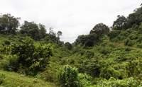 Nairobi - Aberdare o Monte Kenia: Pura naturaleza - Kenia Safari Safari Kenia y Tanzania: Serengeti