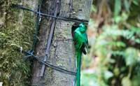 Bosque nuboso Monteverde. Un día de apabullantes riqueza natural - Costa Rica Gran Viaje Tortuguero, Arenal, Monteverde y Manuel Antonio