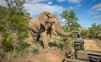 Kruger Reserva Privada – Johannesburgo – Ciudad del Cabo. Rumbo a Ciudad del Cabo - Sudáfrica Safari Kruger en reserva privada y Ciudad del Cabo