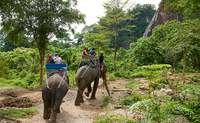 Chiang Mai – Mae Tang – Mujeres jirafa – Chiang Mai. Disfrutando de los elefantes - Tailandia Gran Viaje Alrededor de Tailandia