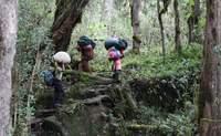 Mandara - Horombo (De 2.700 a 3.820 m). Una tierra sagrada - Tanzania Gran Viaje Ascensión al Kilimanjaro: Ruta Marangu