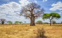 Nairobi – Arusha – Tarangire: Tanzania nos abre sus puertas - Kenia Safari Safari Kenia y Tanzania: Serengeti