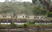 Reserva privada (Área Kruger). Descubriendo los Cinco Grandes de África - Sudáfrica Safari Kruger en reserva privada y Ciudad del Cabo