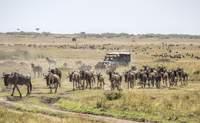 """Masái Mara. Los """"Cinco Grandes"""" bien merecen una segunda visita - Kenia Safari Safari Kenia y Tanzania: Ngorongoro"""