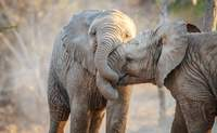 Área del Parque Kruger. Un safari inolvidable - Sudáfrica Safari Parques de Sudáfrica y Cataratas Victoria