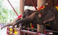 Chiang Mai – Mae Tang – Mujeres jirafa – Chiang Mai. El día en que los elefantes se convirtieron en protagonistas - Tailandia Gran Viaje Bangkok, Chiang Rai y Chiang Mai