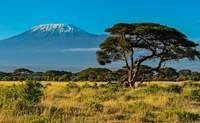 Lago Naivasha - Amboseli. Divisa la cumbre del Kilimanjaro - Kenia Safari Safari en Kenia: Parque Nacional de Tsavo