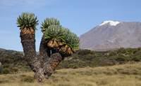 Descenso al hotel base. Regreso a la civilización - Tanzania Gran Viaje Ascensión al Kilimanjaro: Ruta Marangu