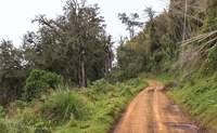 Samburu o Shaba - Montes Aberdare. El mejor lugar para ver rinocerontes negros - Kenia Safari Kenia y Tanzania al completo