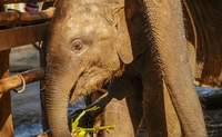 Chiang Mai – Mae Tang – Mujeres jirafa – Chiang Mai. El día en que los elefantes se convirtieron en protagonistas - Tailandia Gran Viaje Bangkok, Chiang Rai, Chiang Mai y Phuket