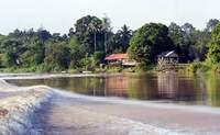Abai Jungle Lodge - Kinabatangan Riverside Lodge. Compartiendo momentos con la vida silvestre - Malasia Gran Viaje Kuala Lumpur y gran tour de Borneo